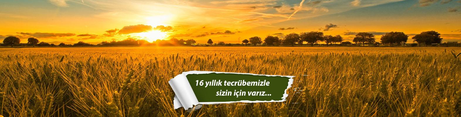 Onsa Polatlı Buğday Unu